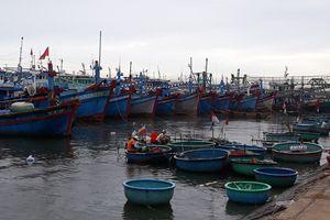 Khánh Hòa mưa lớn, Bình Thuận cấm tàu thuyền ra khơi