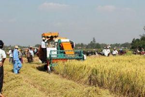Quảng Ngãi: Sau học nghề nhà nông mạnh tay đầu tư nhiều mô hình hay