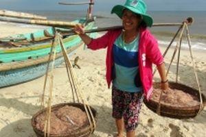 Ngư dân Quảng Bình trúng đậm mùa ruốc