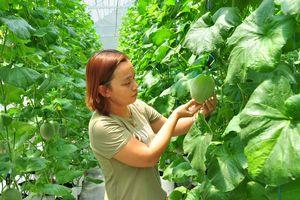 Khởi nghiệp thành công với công nghệ trồng trọt Israel