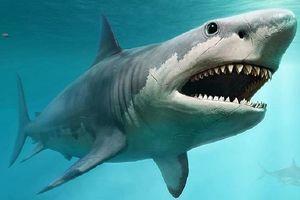 Những điều bất ngờ và thú vị về loài cá mập