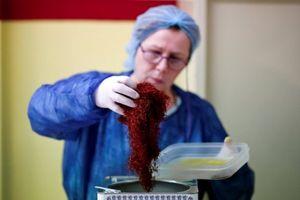 'Thần dược' nhụy nghệ tây và phép màu cho kinh tế Hy Lạp