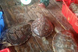 2 người bị khởi tố vì nuôi nhốt rùa biển