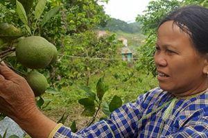 Nơi trồng 'lung tung' các loại cây ăn trái, 'hái' mỗi năm cả trăm triệu