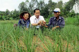 Khôi phục nghề trồng kiệu Hương truyền thống