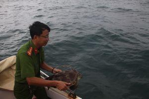 Bị khởi tố vì nuôi nhốt rùa biển trái phép