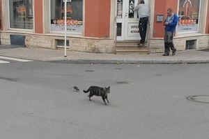 Clip: 'Ngược đời' mèo bị chuột rượt chạy 'trối chết'