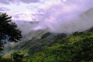 Quảng Nam: Dự án 'Trường Sơn Xanh' giảm phát thải gần 2 triệu tấn CO2