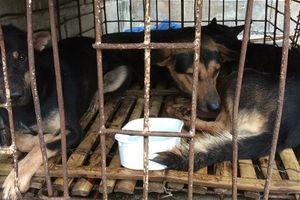 Quảng Trị: 2 tên trộm chó bị tuyên phạt 4 tháng tù