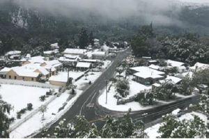 New Zealand tuyết rơi đột ngột trong mùa hè