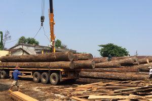 Ngừng kinh doanh tạm nhập tái xuất gỗ tự nhiên từ Lào và Campuchia