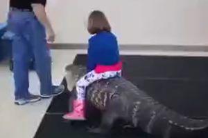Hãi hùng bố cho con gái 7 tuổi thoải mái cưỡi cá sấu