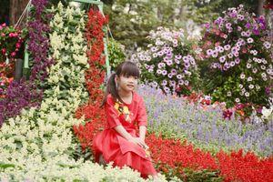 TPHCM: Hội hoa Xuân Kỷ Hợi 2019 sẽ kéo dài 12 ngày