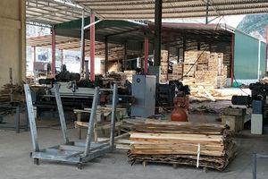 Tĩnh Gia (Thanh Hóa): Công ty Mai Anh 88 xây dựng xưởng sản xuất chế biến gỗ không phép, không ĐTM?