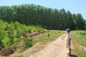 Thừa Thiên Huế: Đất rừng sản xuất được nhà nước cấp bỗng bị lấn chiếm?
