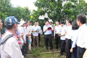 Kinh nghiệm của các nước trong quản lý sản xuất giống cây có múi
