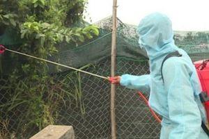 Phú Yên công bố 'sạch' dịch cúm gia cầm H5N6