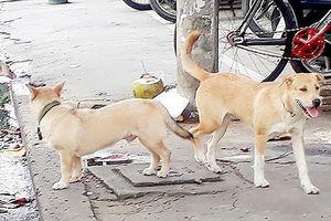 Kiểm soát chặt việc nuôi chó trong khu dân cư