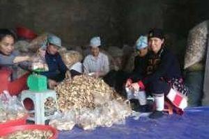 Bài 3: Truyền nhân duy nhất của người Dao 'đánh tan' bệnh tiểu đường