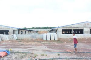 Xây dựng trại heo trái phép: Cục Cảnh sát môi trường vào cuộc