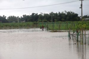 Quảng Nam: Chủ động phòng tránh áp thấp mạnh lên thành bão