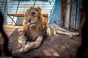 Cảnh sát Albania giải cứu động vật khỏi 'vườn thú địa ngục'