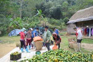Ngưỡng mộ làng cam Phù Lưu không có hộ nghèo, hơn 200 hộ giàu có