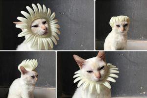 12 style chất ngầu cho chú mèo với món đồ tưởng chừng bỏ đi