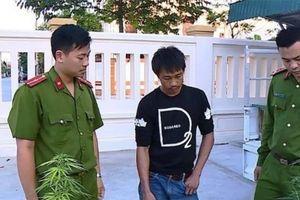 Nghiện ma túy, thanh niên trồng cần sa tại nhà để sử dụng