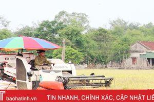 UBND tỉnh cho phép Thạch Hà cải tạo, nâng chất 305ha đất chuyên lúa