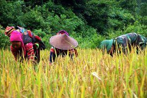 Thắt chặt tình quân dân nơi biên giới Mường Tè, Lai Châu