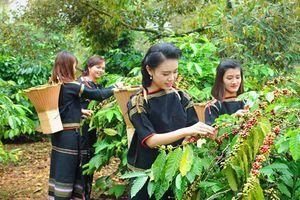 BẢN TIN TÀI CHÍNH-KINH DOANH: Nông dân mất nghìn tỷ vì mất mùa cà phê, lợi ích CPTPP mang lại cho Việt Nam