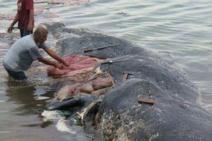 Sự thật gây sốc bên trong bụng của con cá nhà táng trôi dạt bờ biển