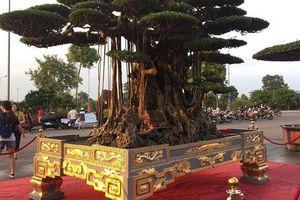 'Choáng' với bộ bàn ghế ngọc, cây sanh cổ giá chục tỷ đồng