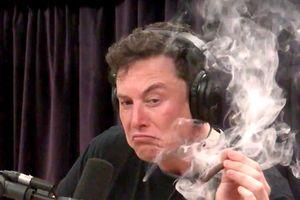 Elon Musk hút cần, SpaceX bị thanh tra an toàn lao động