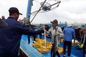 400 tàu đánh cá đã vào Quy Nhơn tránh bão số 9