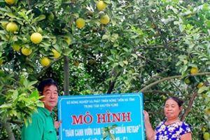 Nhung hươu Hương Sơn, cam Bù, bưởi Phúc Trạch góp mặt trong OCOP