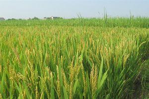 Quảng Trị triển khai các mô hình nông nghiệp thích ứng với biến đổi khí hậu