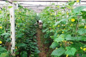 Đảm bảo quyền và lợi ích của hộ nông dân trong tích tụ ruộng đất