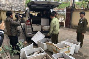 Hơn 400kg cá tầm nhập lậu bị bắt giữ tại Lạng Sơn