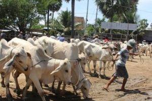 An Giang: Chợ bò Tà Ngáo độc đáo ở vùng biên mùa nước nổi