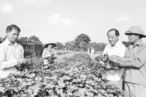 Người nặng lòng với sự nghiệp 'tam nông'