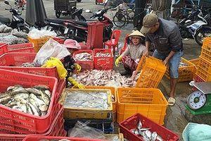 Phiên chợ cá Bình Thuận trước giờ tránh bão