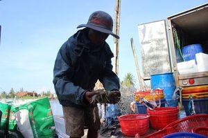 Quảng Nam: Hỗ trợ 35 vạn tôm giống cho trường hợp tôm chết trắng bất thường ở Núi Thành