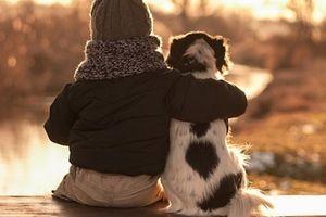 Chó có thể phân biệt được người tốt, kẻ xấu