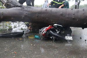 TPHCM mưa lớn, cây xanh bật gốc ngã đè người đi đường tử vong