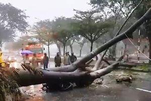 TP.HCM: Một người chạy xe máy bị cây xanh đè tử vong trong bão số 9