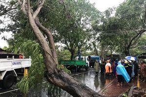 Trung tâm ngoại ngữ Yola vẫn hoạt động trong cơn bão