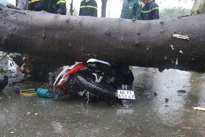Bão số 9 gây mưa lớn, cây gãy đổ đè chết người đi đường