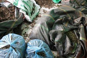 Hải Phòng: Phát hiện 3 kho chứa hàng tấn dược liệu đông y không rõ nguồn gốc